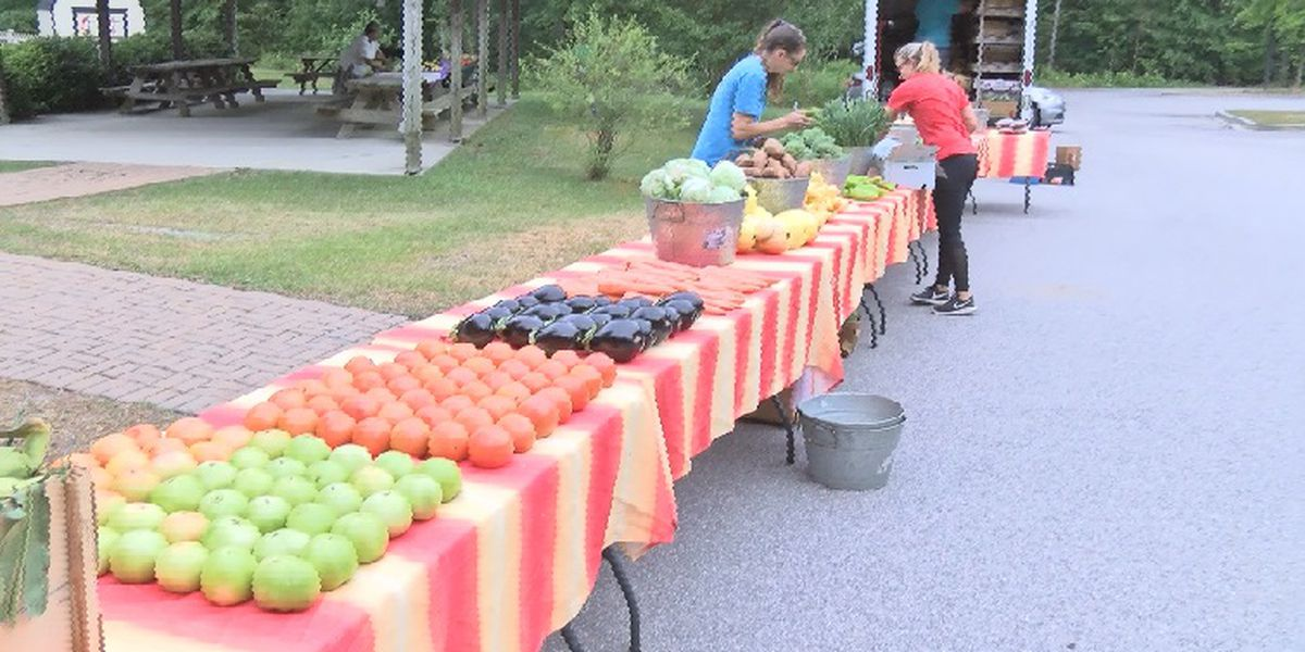 DSS nutrition program returns helping those in SC living in food deserts