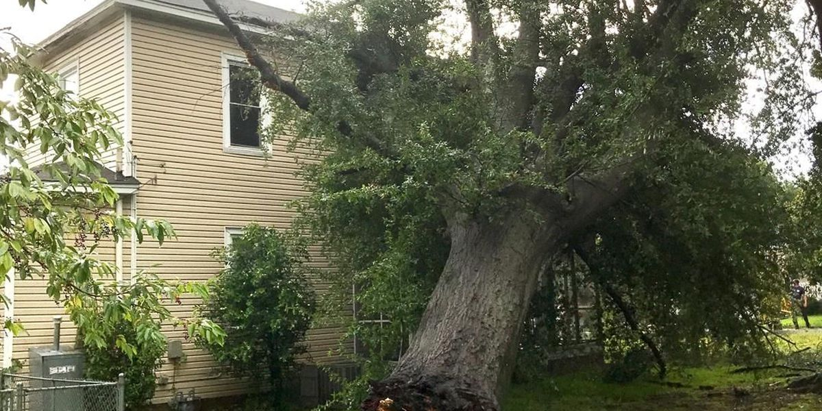 Minor damage to Columbia home after tree falls during storms