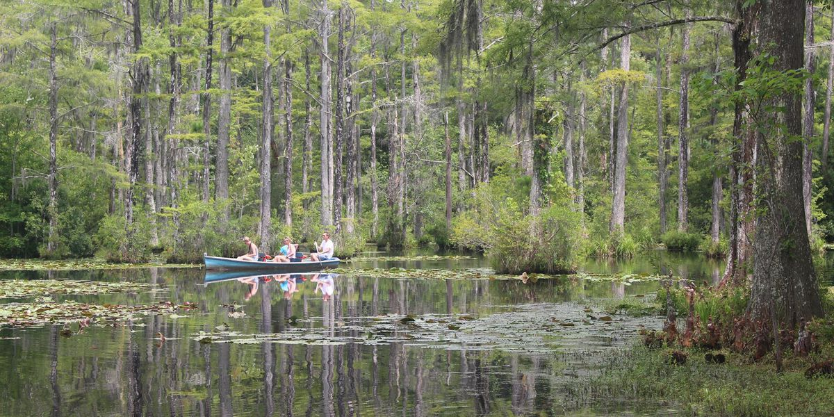 Berkeley County announces grand re-opening date for Cypress Gardens