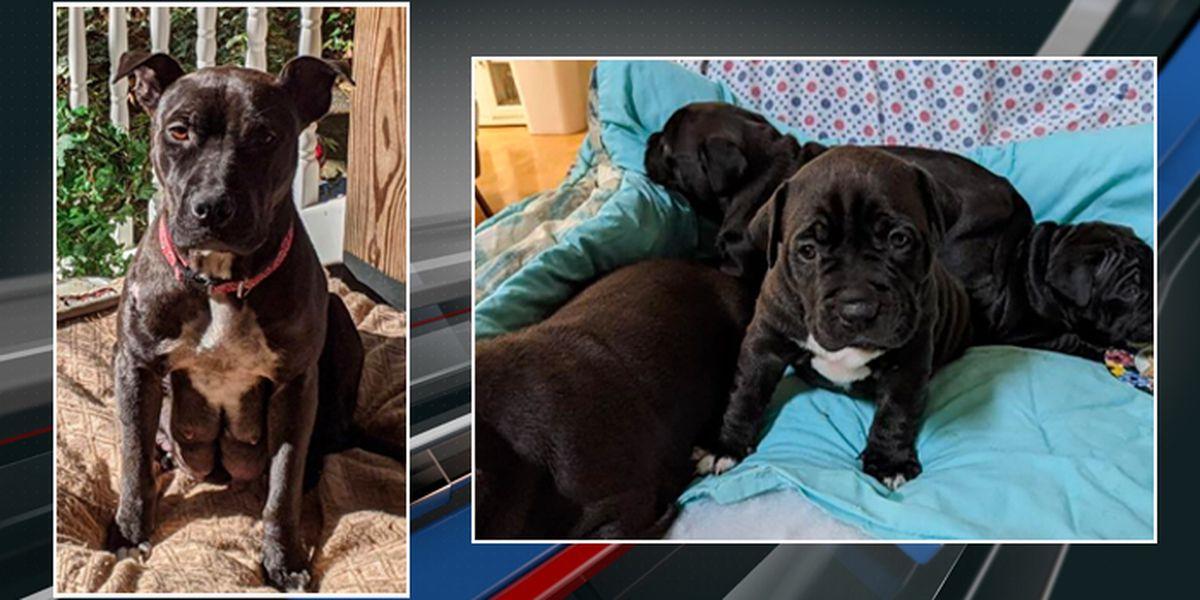 Charleston Animal Society offering $5K reward in dognapping case