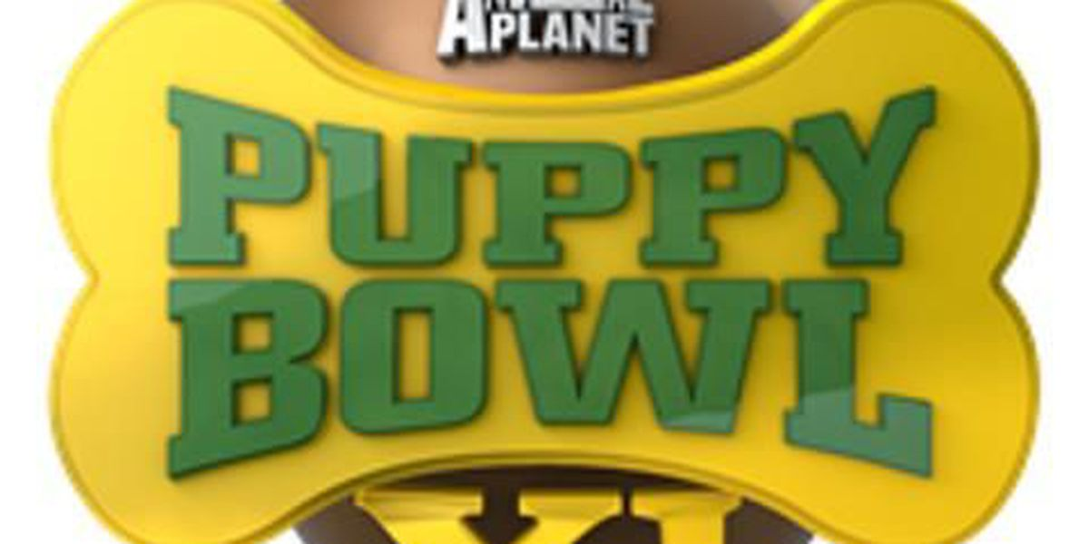 Puppy Bowl XI Facts