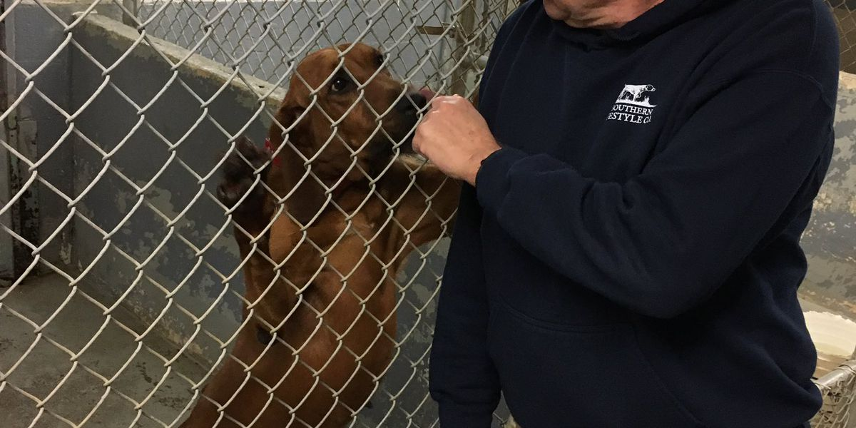 Long-time K-9 deputy injured in York County shooting returns to work