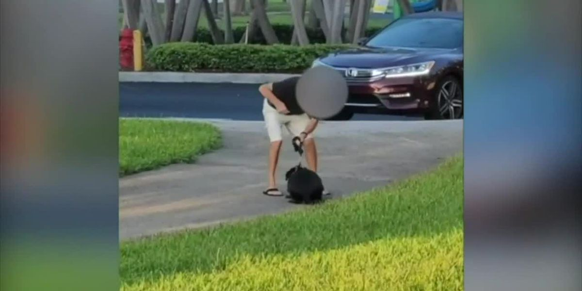 GRAPHIC: Police investigating Florida man caught on camera punching dog