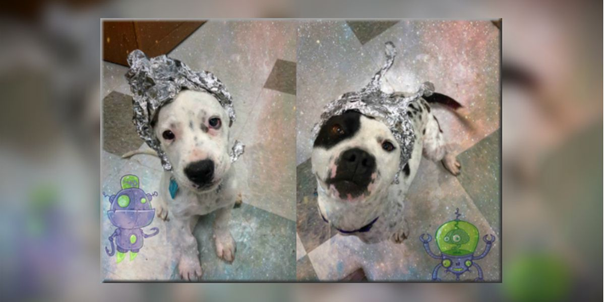 Animal shelter: Raid us instead of Area 51