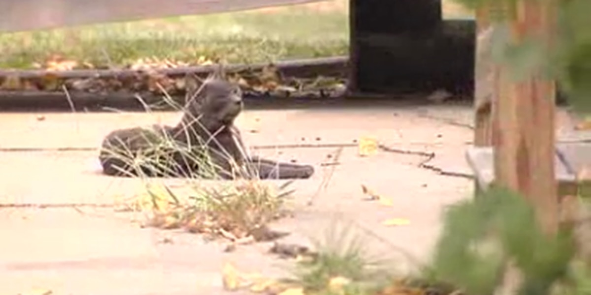 New ordinance will allow cats to live freely throughout Lexington Co.
