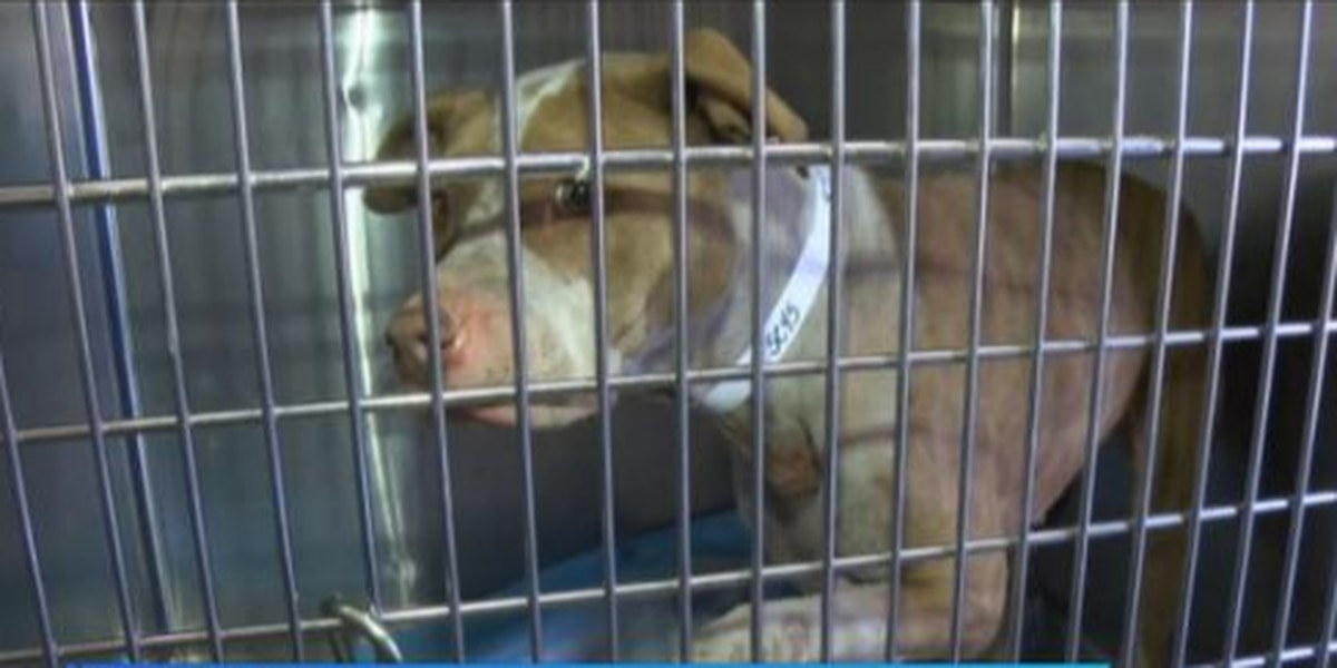 Advocates call for animal cruelty awareness after 23 puppies rescued