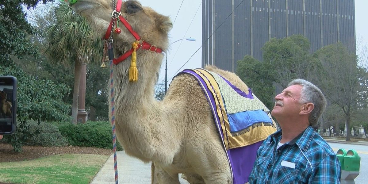Abraham, the Mountain Dew drinking camel, to star in performance