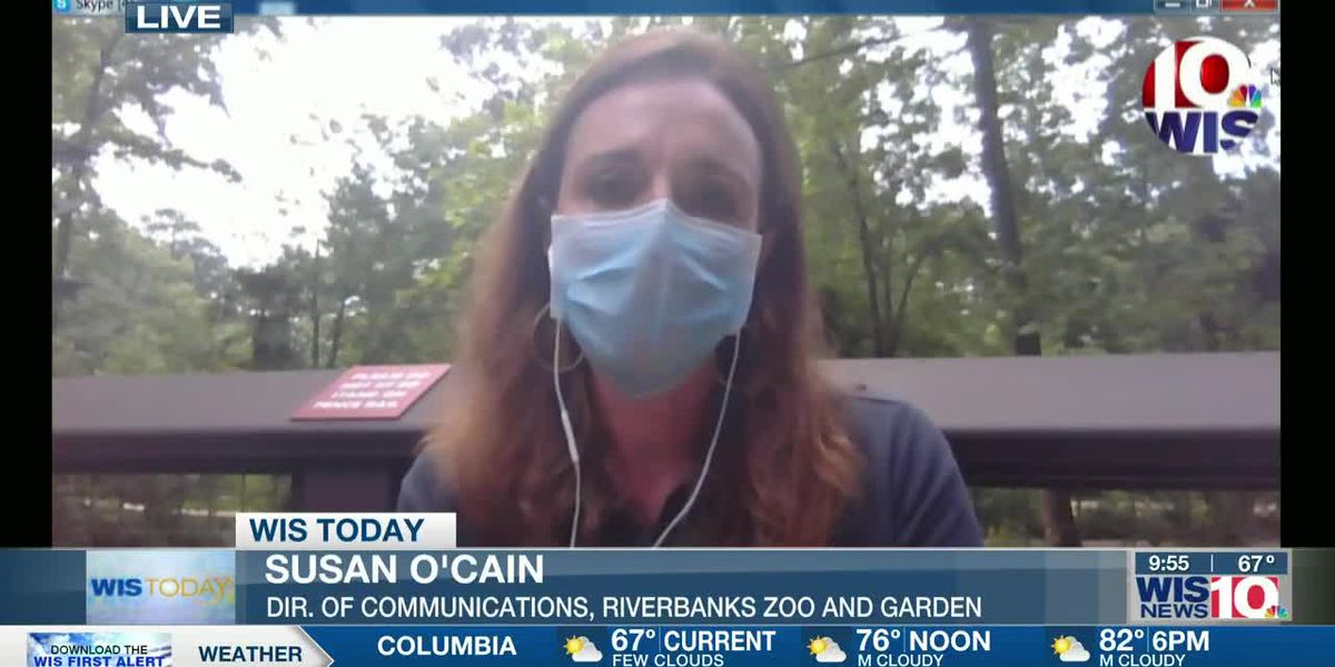 WIS TODAY: Susan Ocain discusses Riverbanks Zoo reopening