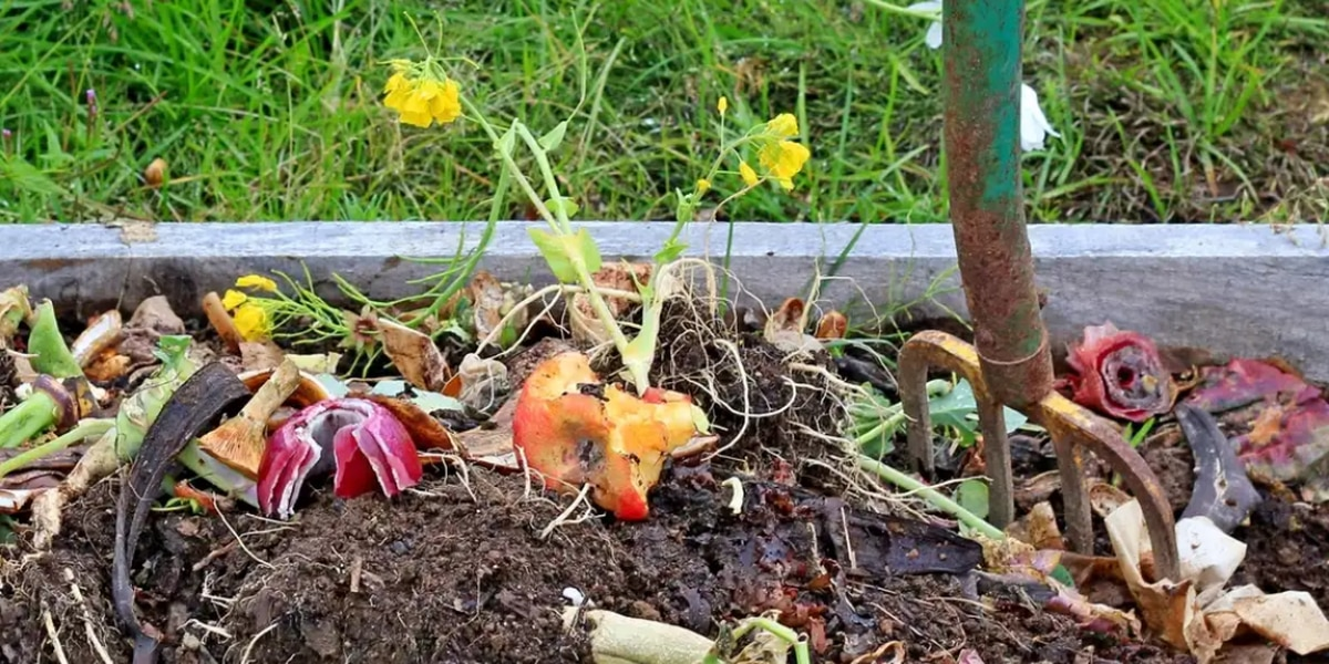 Composting 101: 3 things you need to know before you start