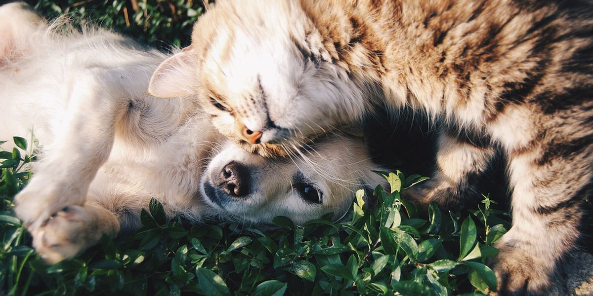 Talk of the Town: How to really love your pets for Valentine's Day
