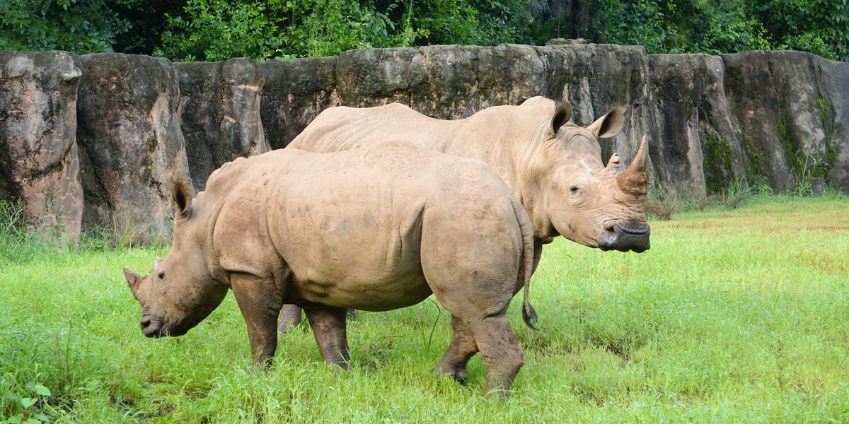 Riverbanks Zoo welcomes two rhinos to brand new habitat