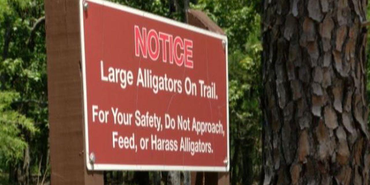 SC officials offer precautions to prevent alligator attacks