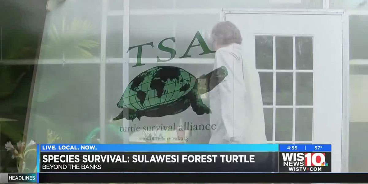 Beyond the Banks: Sulawesi Forest Turtle