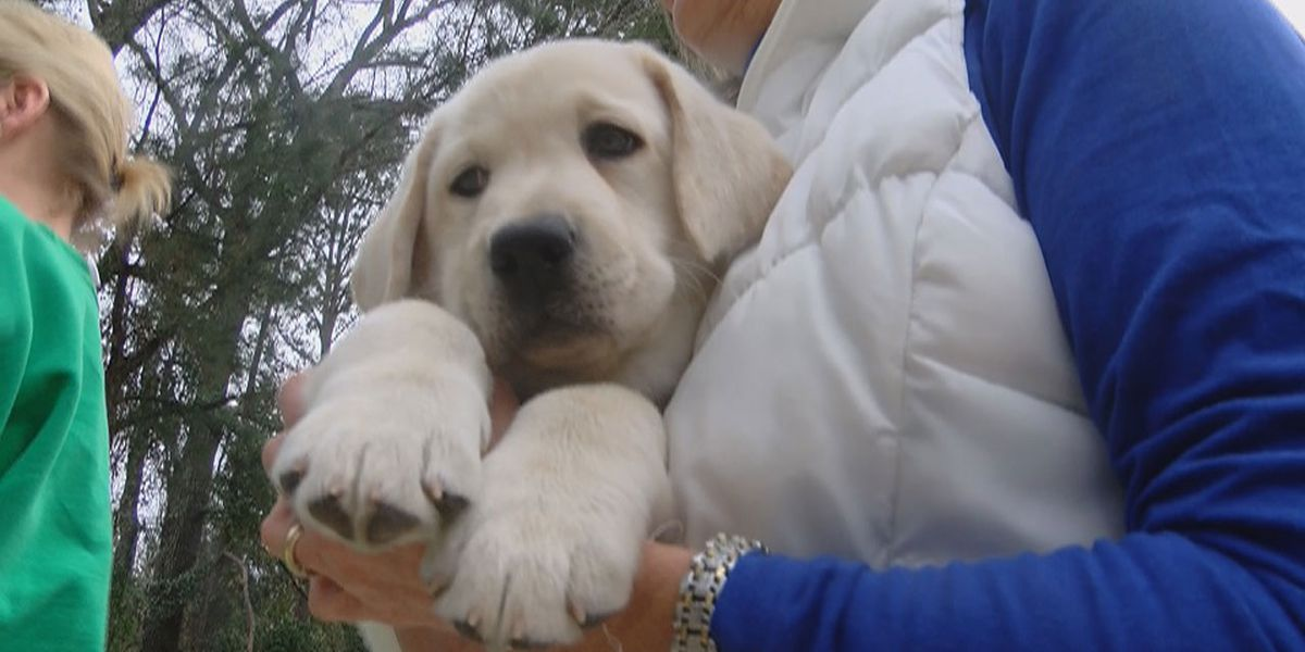 Pick of the litter: which PAALS pups stayed for us to follow and which pups found new homes?