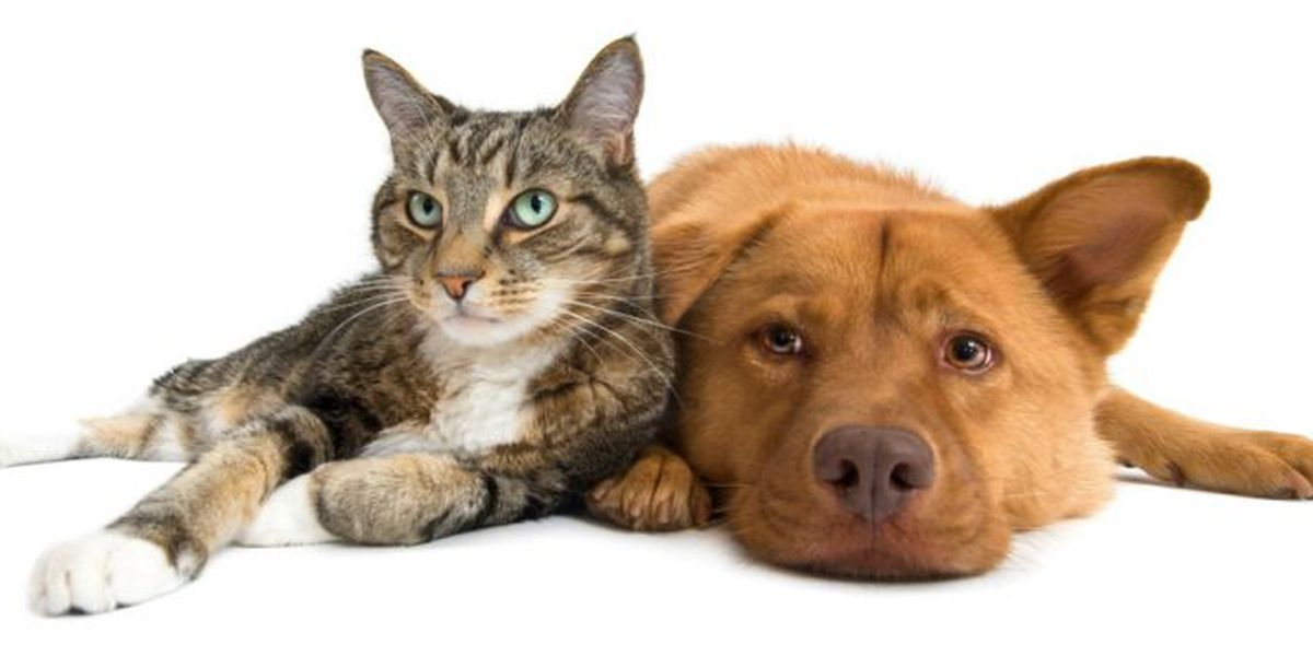 Columbia Animal Services hosts Cinco de Mayo adoption special
