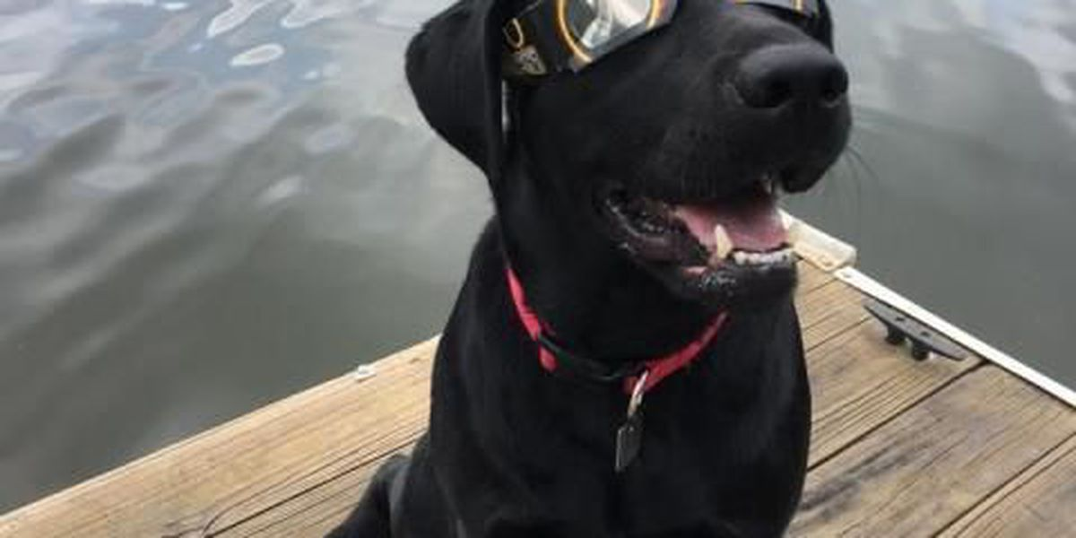 Do your pets need special glasses for the eclipse?