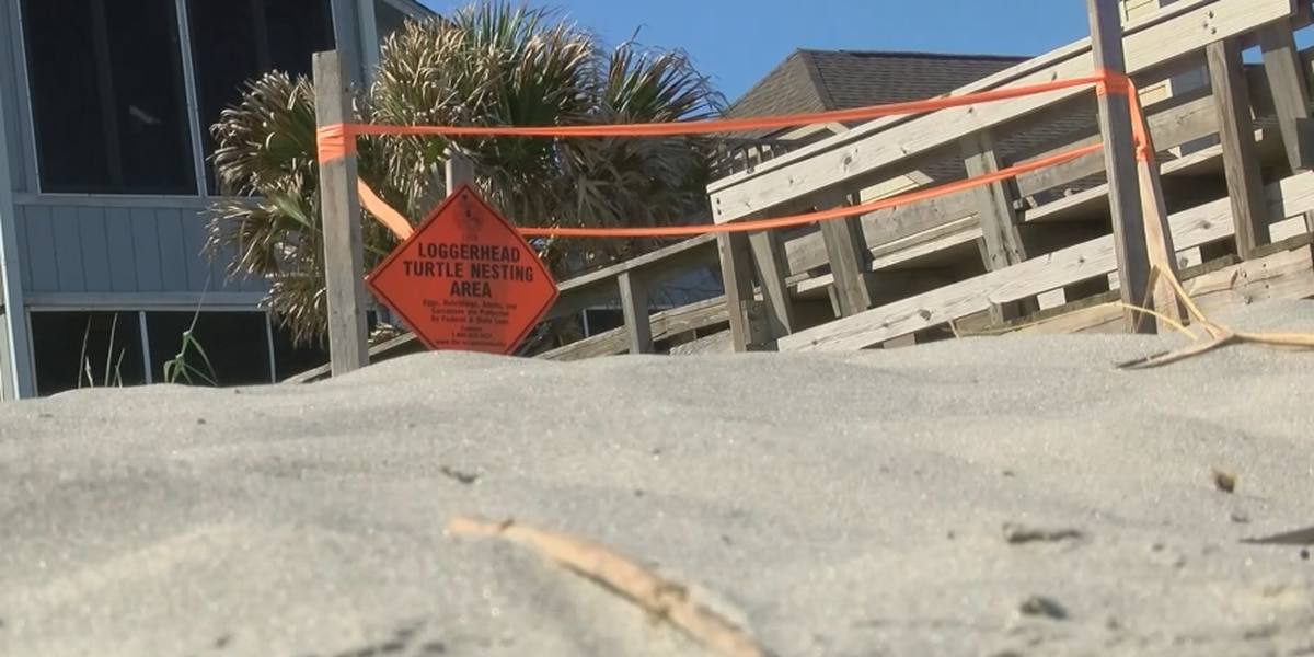 Turtle nesting season starts along SC beaches