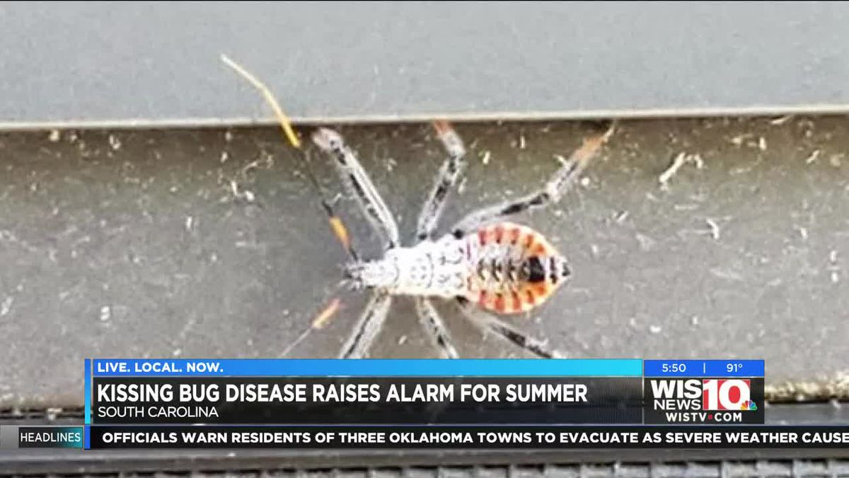 A lethal kiss for your beloved pet; vet warns of dangers of kissing bugs ahead of summer heat