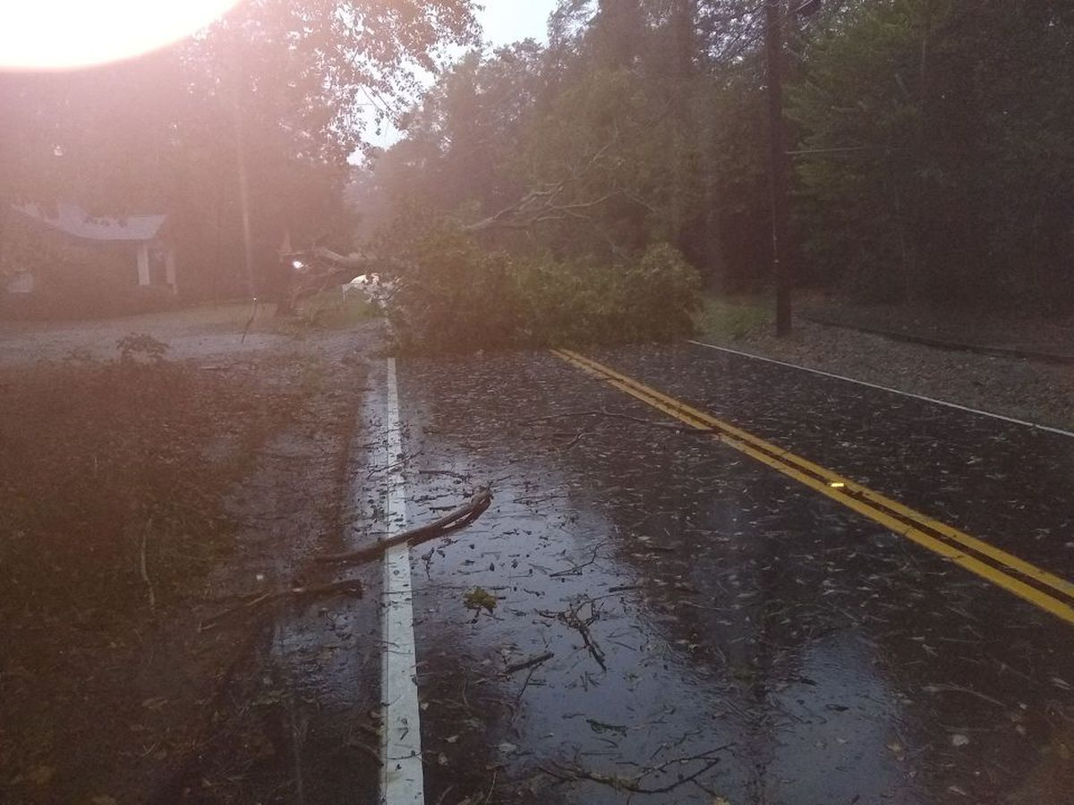 Tree topples into road during Halloween storm in Lexington County