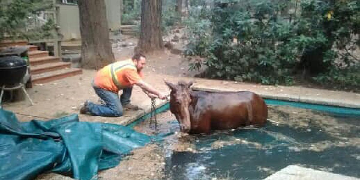 Rescuers found horse that escaped wildfire shivering in a pool
