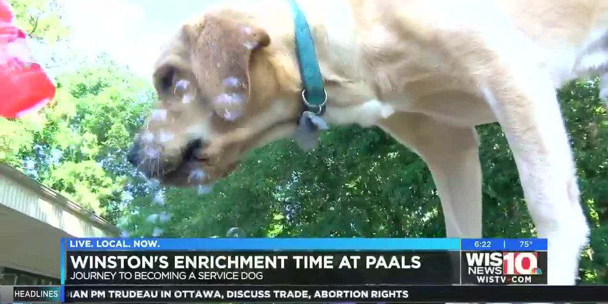 Winston enjoys enrichment time at PAALS