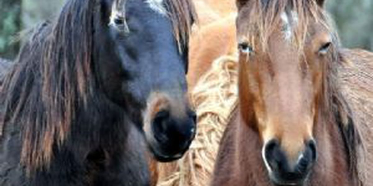 Horses reported stolen from Kershaw Co. farm