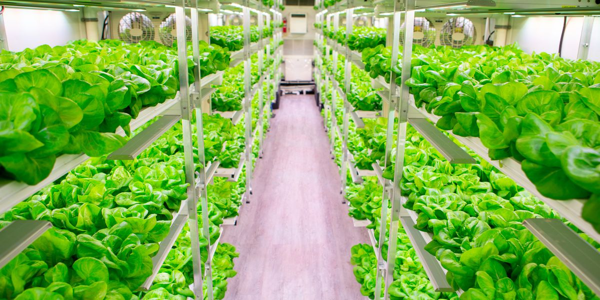 South Carolina hydroponic container farm makes a large impact with a small footprint