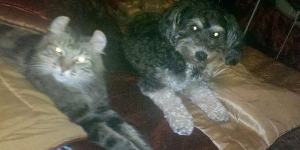 Family needs help finding lost pets after home destroyed by fire