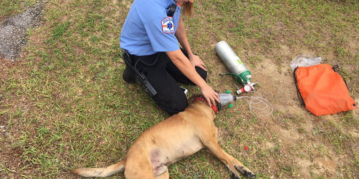 Firefighters resuscitate dog rescued from house fire
