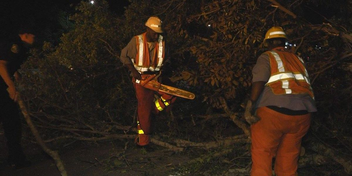Fallen tree blocks I-126 lanes for several hours
