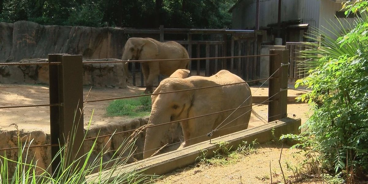 Riverbanks Zoo's elephants undergo training to prepare for move