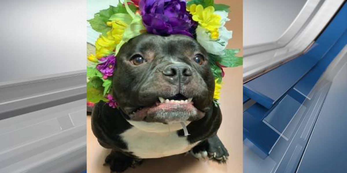 Furry Friends Fridays: Meet Petunia