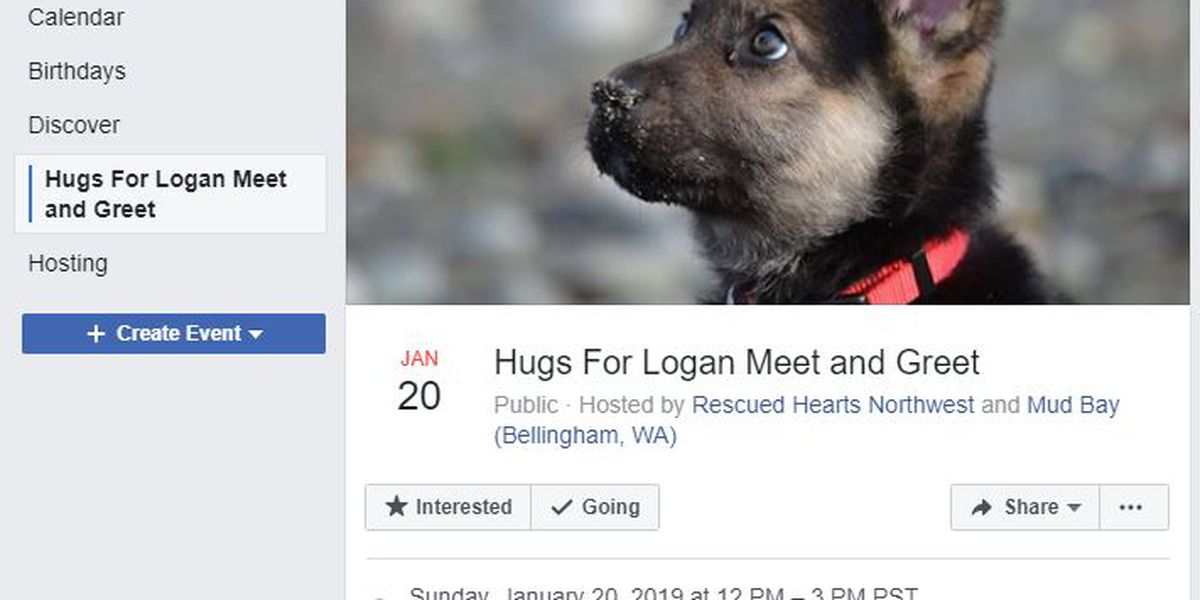 Puppy set to get 100 hugs as community checks off his bucket list