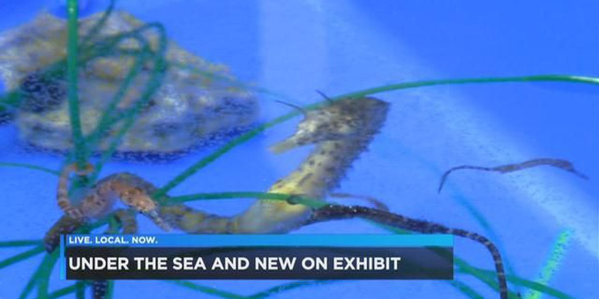 Beyond the Banks: Expect new additions to the Riverbanks aquarium!