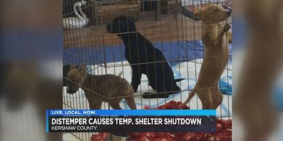 Kershaw Co. to hold canine distemper vaccination clinics