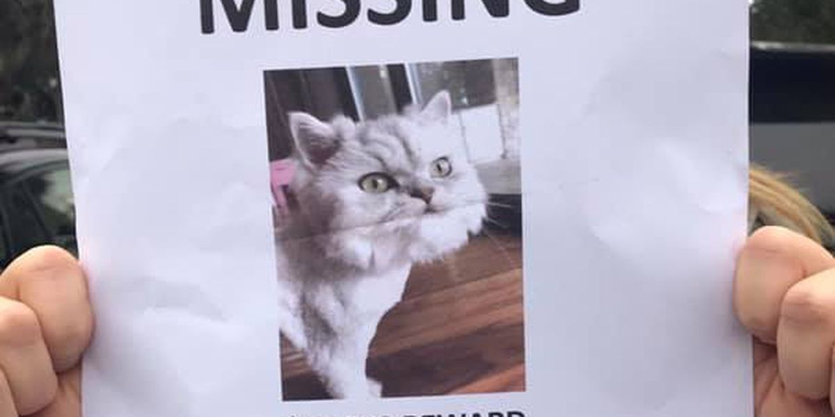 $10,000 Reward for Missing Cat