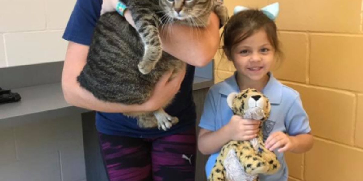 UPDATE: SC family adopts 24 lb. tubby tabby at Florida humane society