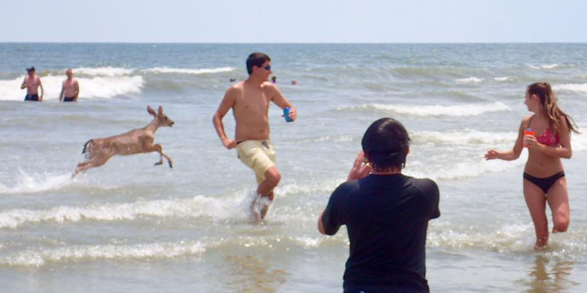 SC man captures deer gallivanting through waters at Hilton Head Island