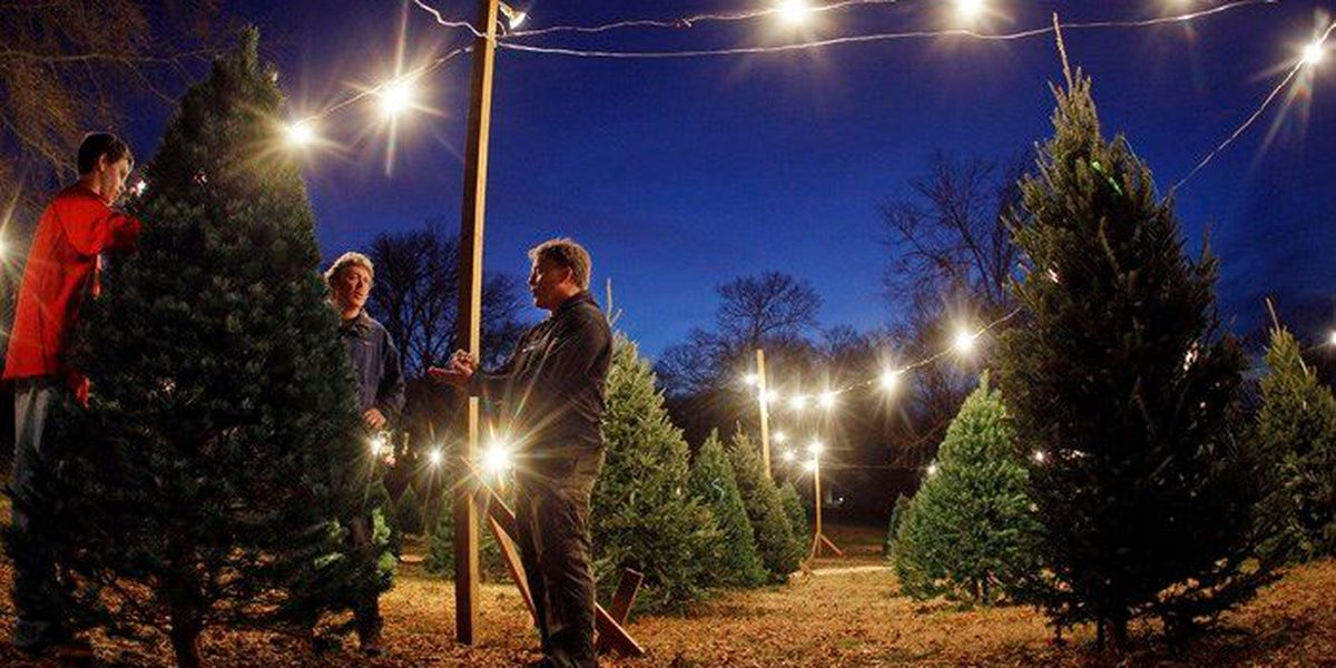 Coming soon on Amazon: Real, full-sized Christmas trees