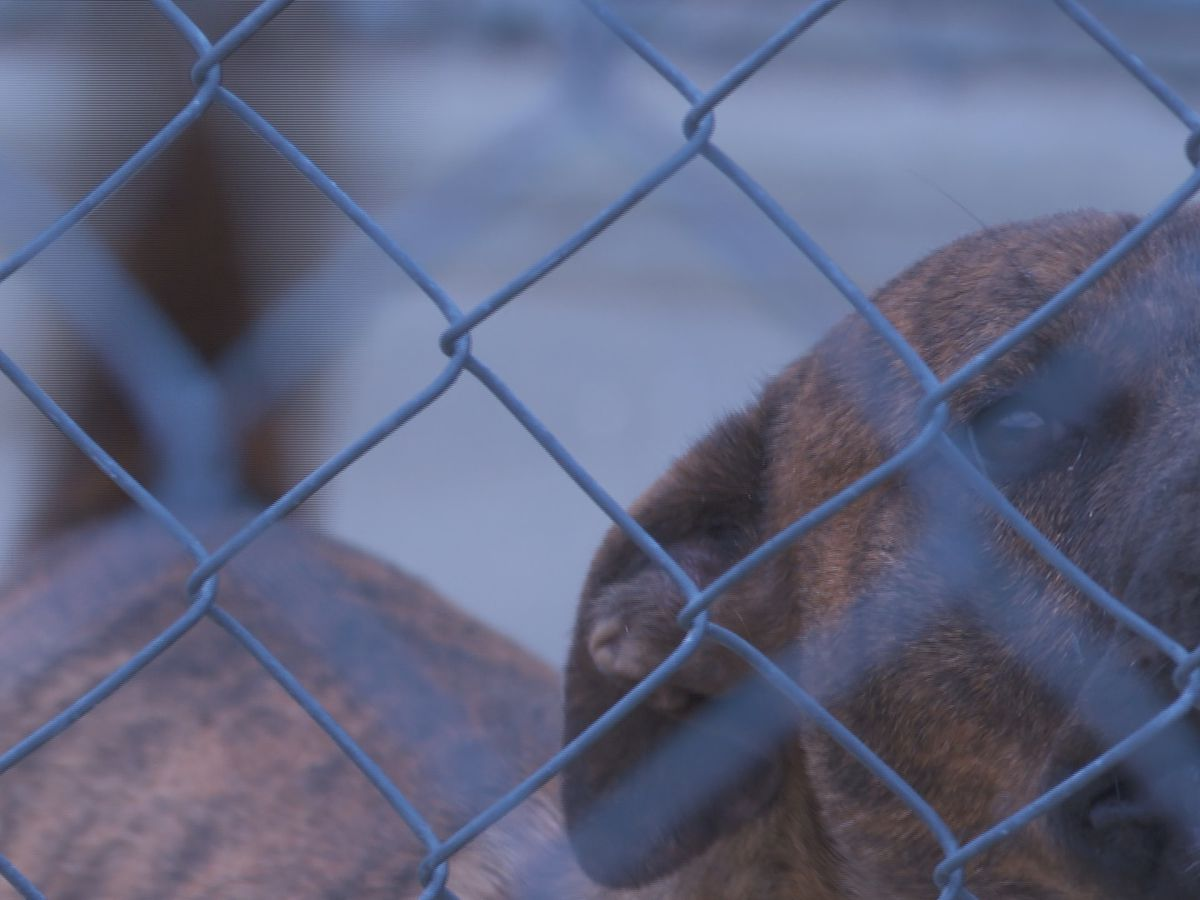 Clarendon County animal shelter closes to the public, nearly 100 animals still in need of care