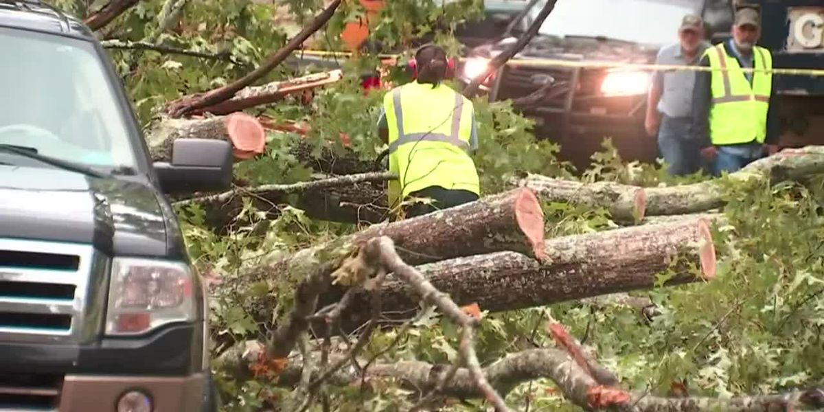 Georgia man killed by fallen tree after Hurricane Zeta