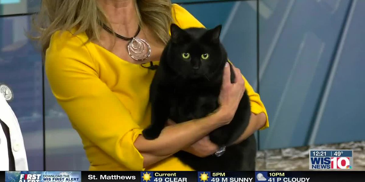 Talk of the Town: How to help your pets lose weight