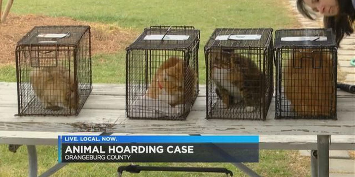 60+ cats, 4 dogs rescued in Orangeburg Co. hoarding case