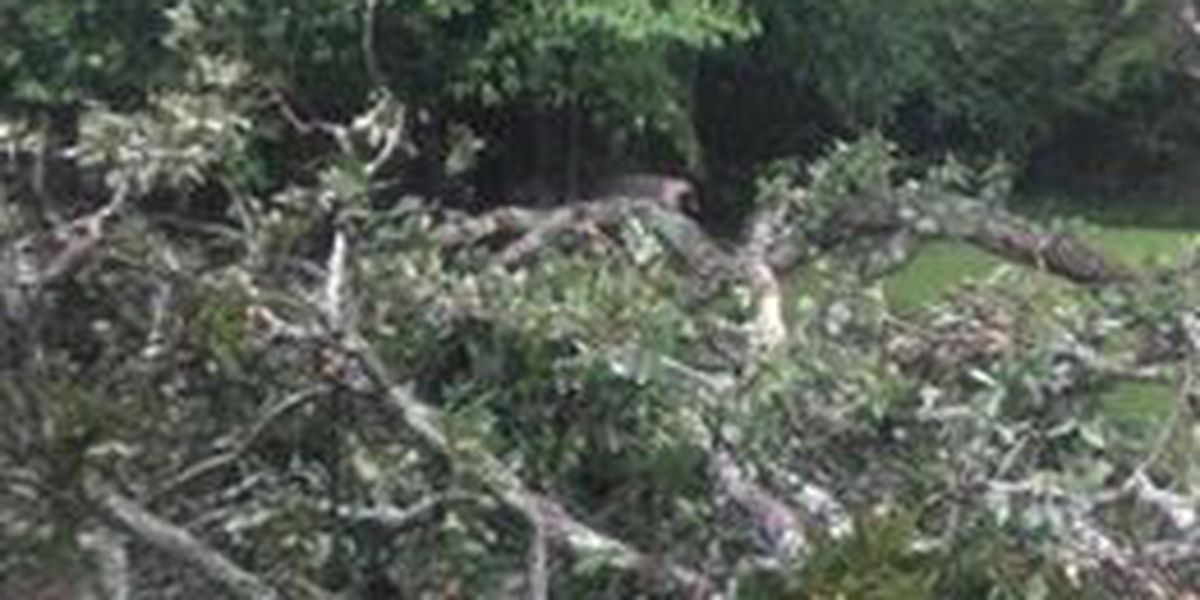 Thursday storms blow down trees, knock out power