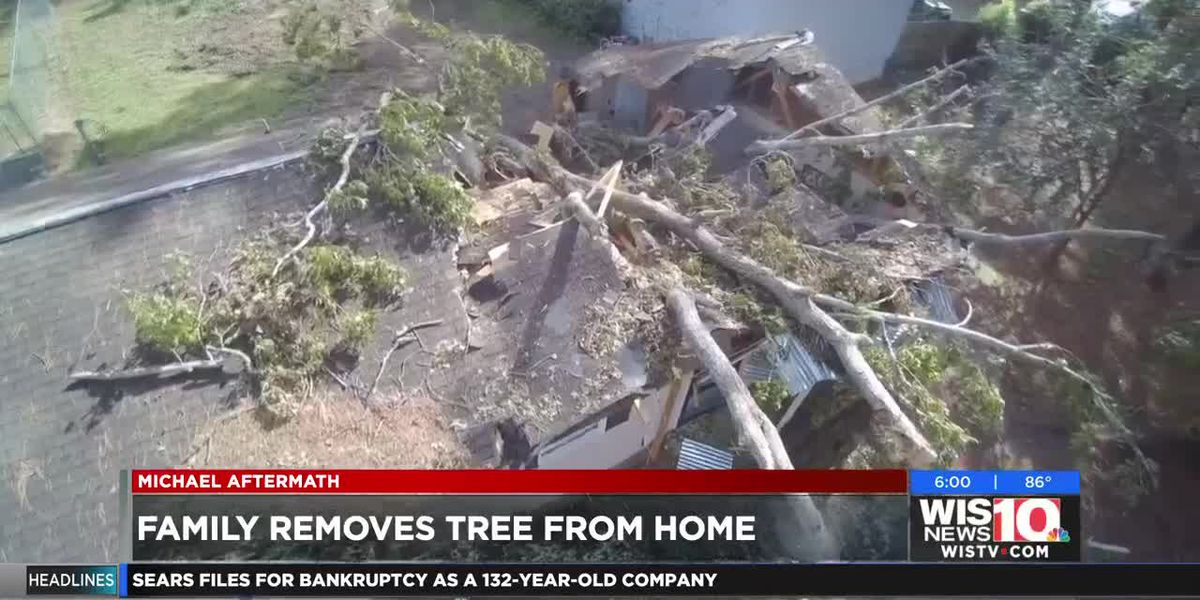 'It sounded like a bomb and felt like an earthquake,' Midlands family describes tree falling