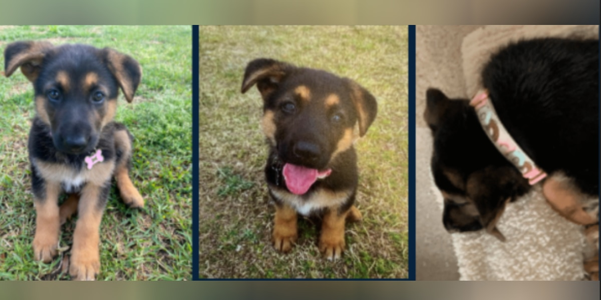 CPD searching for 9-week-old puppy stolen from front yard