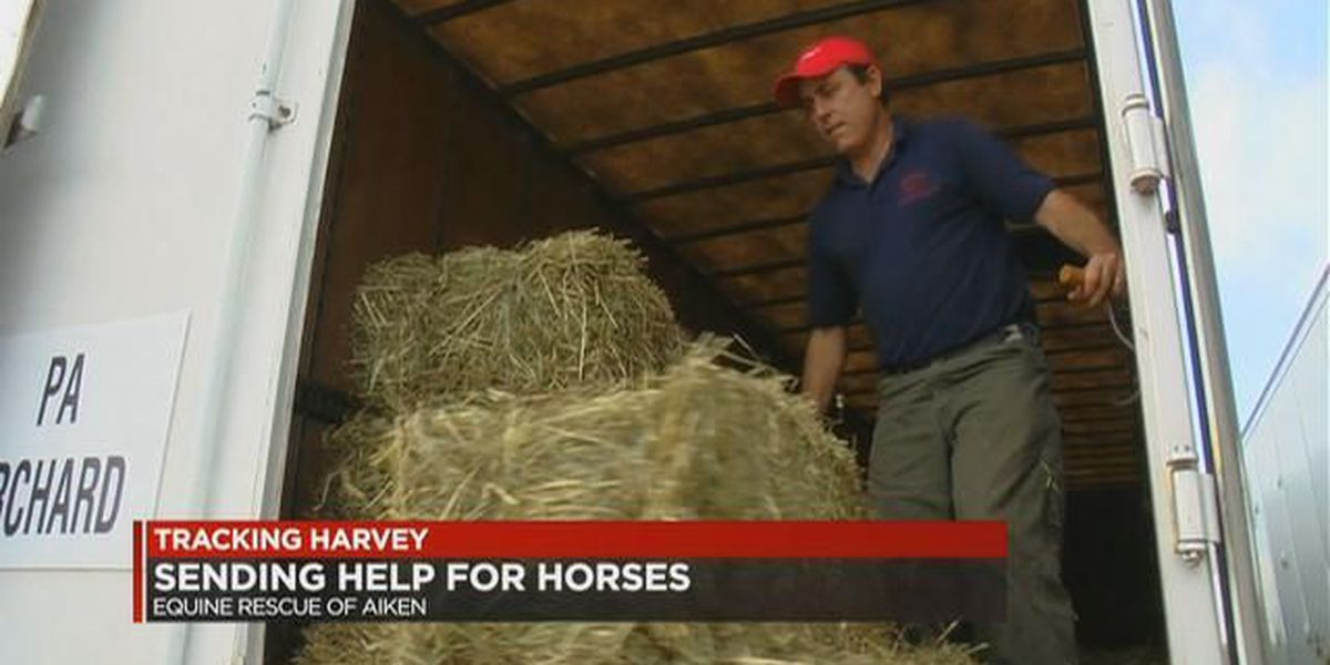 Help wanted for horses suffering from Hurricane Harvey in Houston