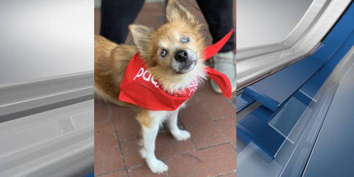 Furry Friends Fridays: Meet Lassie
