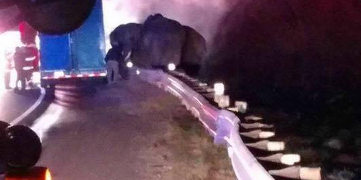 PHOTO: 'Huge, but well-behaved' elephants safe after tractor-trailer fire at GA-TN line