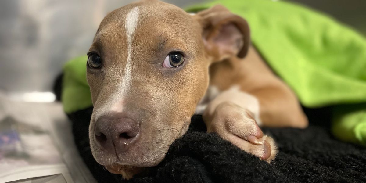 Puppy found wrapped in garbage bags in Charlotte dumpster - now up for adoption
